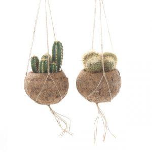 kokodamacactus_pertwee kokodama bromelia hangplant plafond mix hangend hangtuing