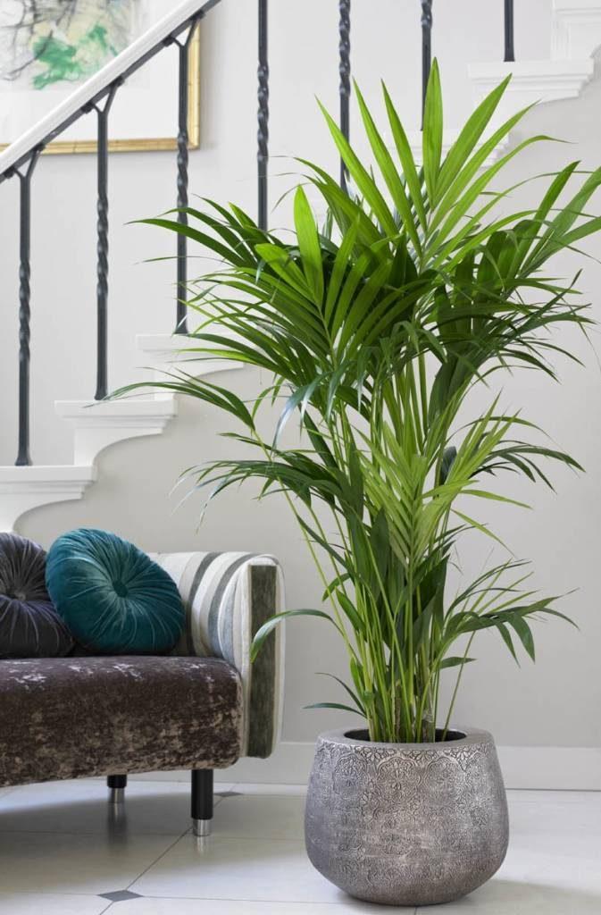 moderne planten voor binnen