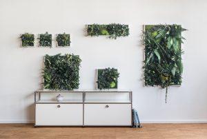 verticale tuin tuinen goedkoop bestellen online kopen kant en klaar contstructie voor muur